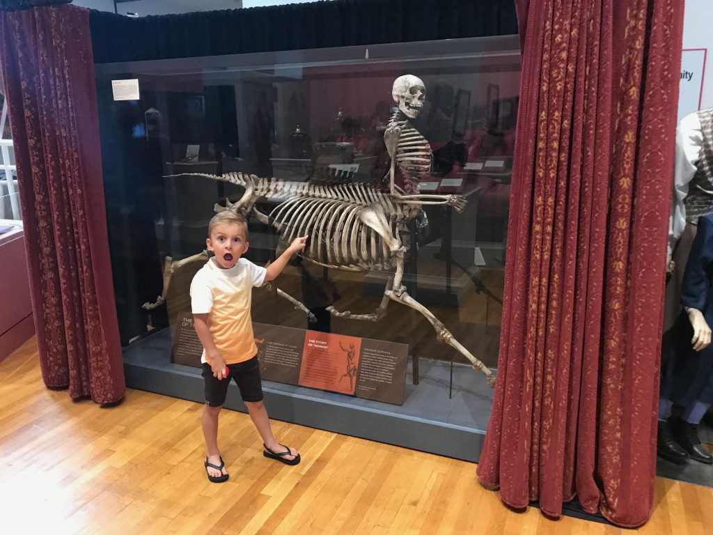 Centaur Exhibit at the Barnum Museum