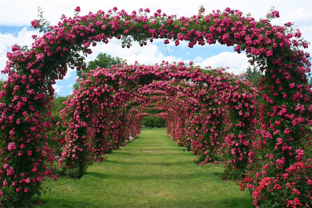 Elizabeth Park's Rose Garden